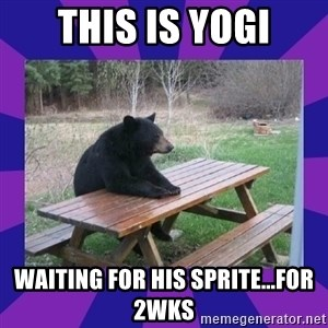 waiting bear - This is Yogi Waiting for his Sprite...for 2wks