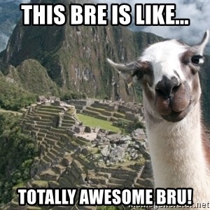Bossy the Llama - This BRE is like... Totally Awesome bru!
