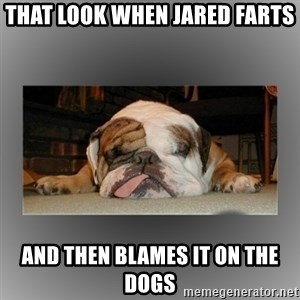 English Bulldog - That look when Jared Farts And then blames it on the dogs