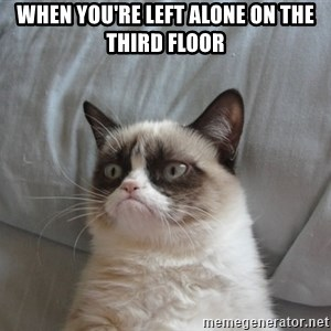 Grumpy cat good - When you're left alone on the third floor