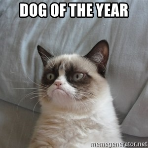 Grumpy cat good - dog of the year