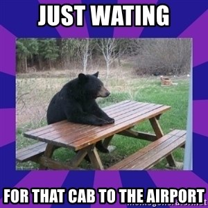 waiting bear - Just Wating For that cab to the airport