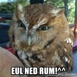 Overly Angry Owl -  Eul ned rum!^^