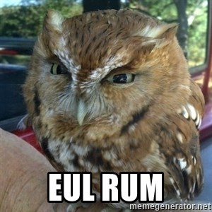 Overly Angry Owl -  Eul rum