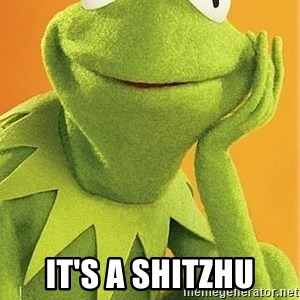 Kermit the frog -  It's a Shitzhu