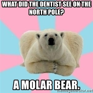 Perfection Polar Bear - What did the dentist see on the North Pole? A molar bear.