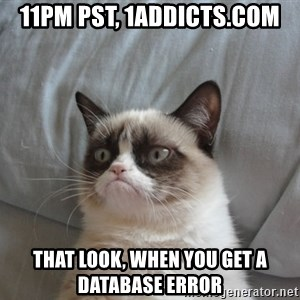 Grumpy cat good - 11PM PST, 1addicts.com That look, when you get a database error