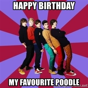 typical 1D - HAPPY BIRTHDAY MY FAVOURITE POODLE