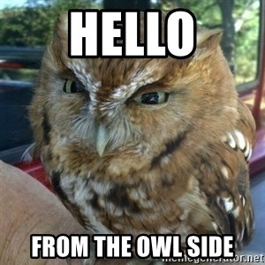 Overly Angry Owl - Hello From the Owl Side