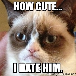 Angry Cat Meme - How cute... I hate him.