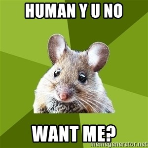 Prospective Museum Professional Mouse - human y u no want me?