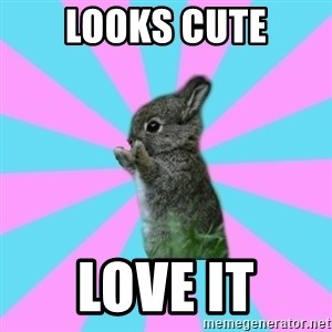 yAy FoR LifE BunNy - LOOKS CUTE LOVE IT