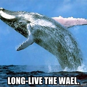 whaleeee -  Long-live the wael.