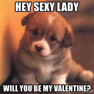 cute puppy - hey sexy lady will you be my valentine?