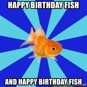 Absentminded Goldfish - HAPPY BIRTHDAY FISH AND HAPPY BIRTHDAY FISH