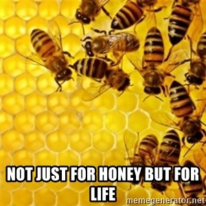 Honeybees -  Not just for honey but for LIFE