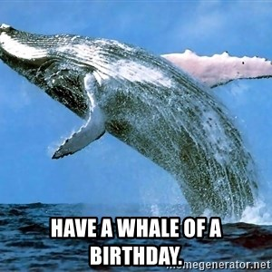 whaleeee -  Have a Whale of a Birthday.