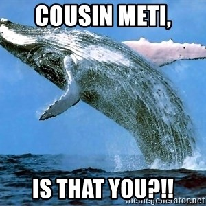 whaleeee - Cousin Meti, Is that you?!!