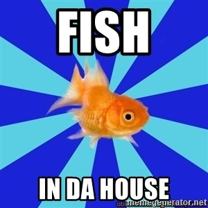 Absentminded Goldfish - Fish In da house