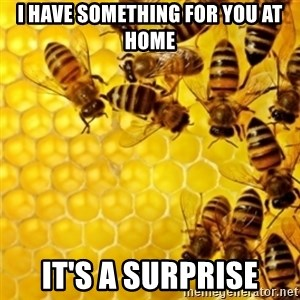 Honeybees - I have something for you at home It's a surprise