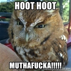 Overly Angry Owl - Hoot hoot muthafucka!!!!!