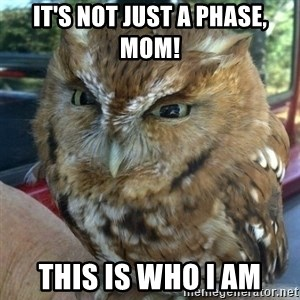 Overly Angry Owl - IT'S NOT JUST A PHASE, MOM! THIS IS WHO I AM