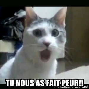Surprised Cat -  Tu nous as fait peur!!