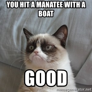 Grumpy cat good - you hit a manatee with a boat good