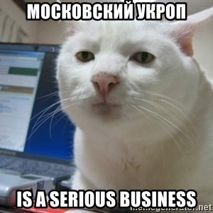 Serious Cat - московский укроп is a serious business