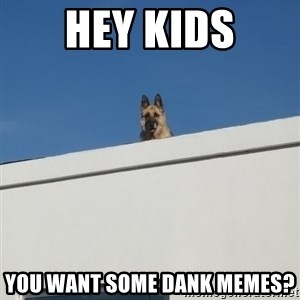 Roof Dog - Hey Kids You want some dank memes?