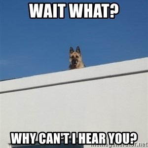 Roof Dog - wait what? why can't i hear you?