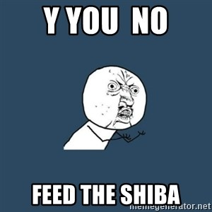 y you no - Y You  No Feed the Shiba