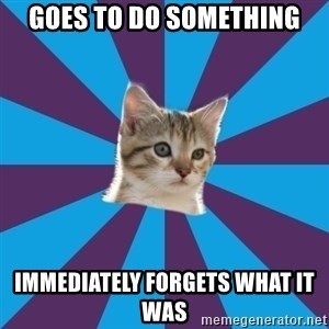 Autistic Kitten - goes to do something immediately forgets what it was