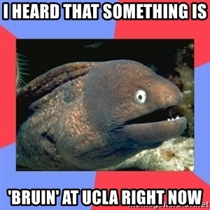 Bad Joke Eels - I heard that something is  'bruin' at UCLA right now