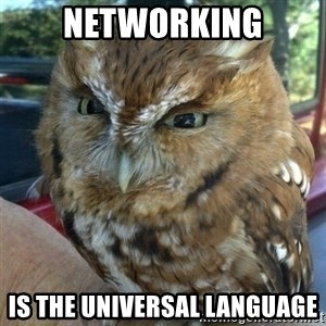 Overly Angry Owl - Networking is the universal language