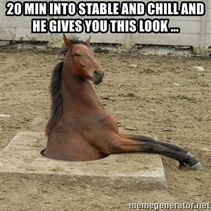 Hole Horse - 20 min into stable and chill and he gives you this look ...