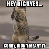 Begging Cat - Hey Big Eyes... sorry, didn't meant it