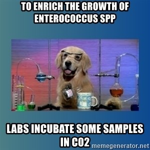 Chemistry Dog - To enrich the growth of enterococcus spp labs incubate some samples in c02