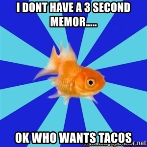 Absentminded Goldfish - i dont have a 3 second memor..... ok who wants tacos