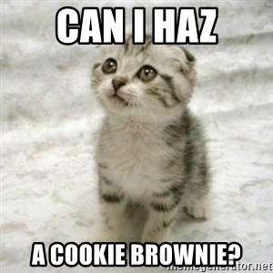 Can haz cat - can i haz a cookie brownie?