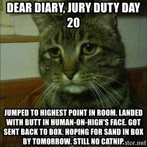 Depressed cat 2 - Dear diary, jury duty day 20 Jumped to highest point in room. Landed with butt in human-on-high's face. Got sent back to box. Hoping for sand in box by tomorrow. Still no catnip.