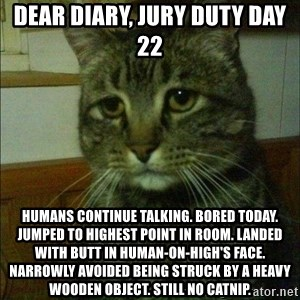 Depressed cat 2 - Dear Diary, Jury Duty day 22 Humans continue talking. Bored today. Jumped to highest point in room. Landed with butt in human-on-high's face. Narrowly avoided being struck by a heavy wooden object. Still no catnip.
