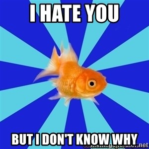 Absentminded Goldfish - I hate you But I don't know why