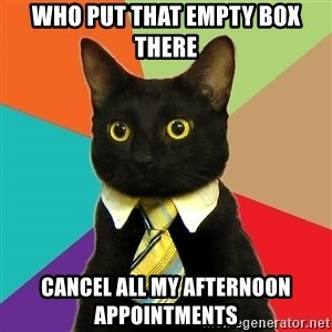 Business Cat - who put that empty box there cancel all my afternoon appointments