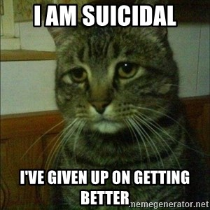 Depressed cat 2 - I am suicidal I've given up on getting better