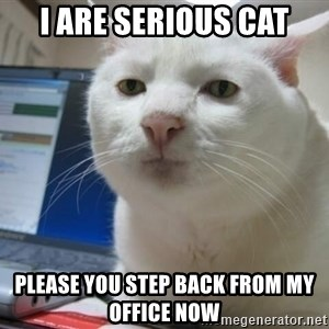 Serious Cat - I are serious cat please you step back from my office now