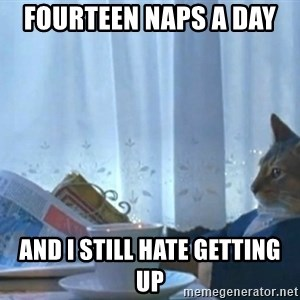 newspaper cat realization - fourteen naps a day  and I still hate getting up