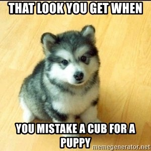 Baby Courage Wolf - That look you get when you mistake a cub for a puppy