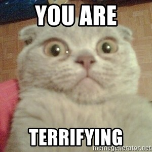 GEEZUS cat - you are terrifying