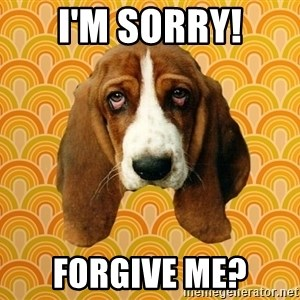 SAD DOG - I'm Sorry! Forgive Me?